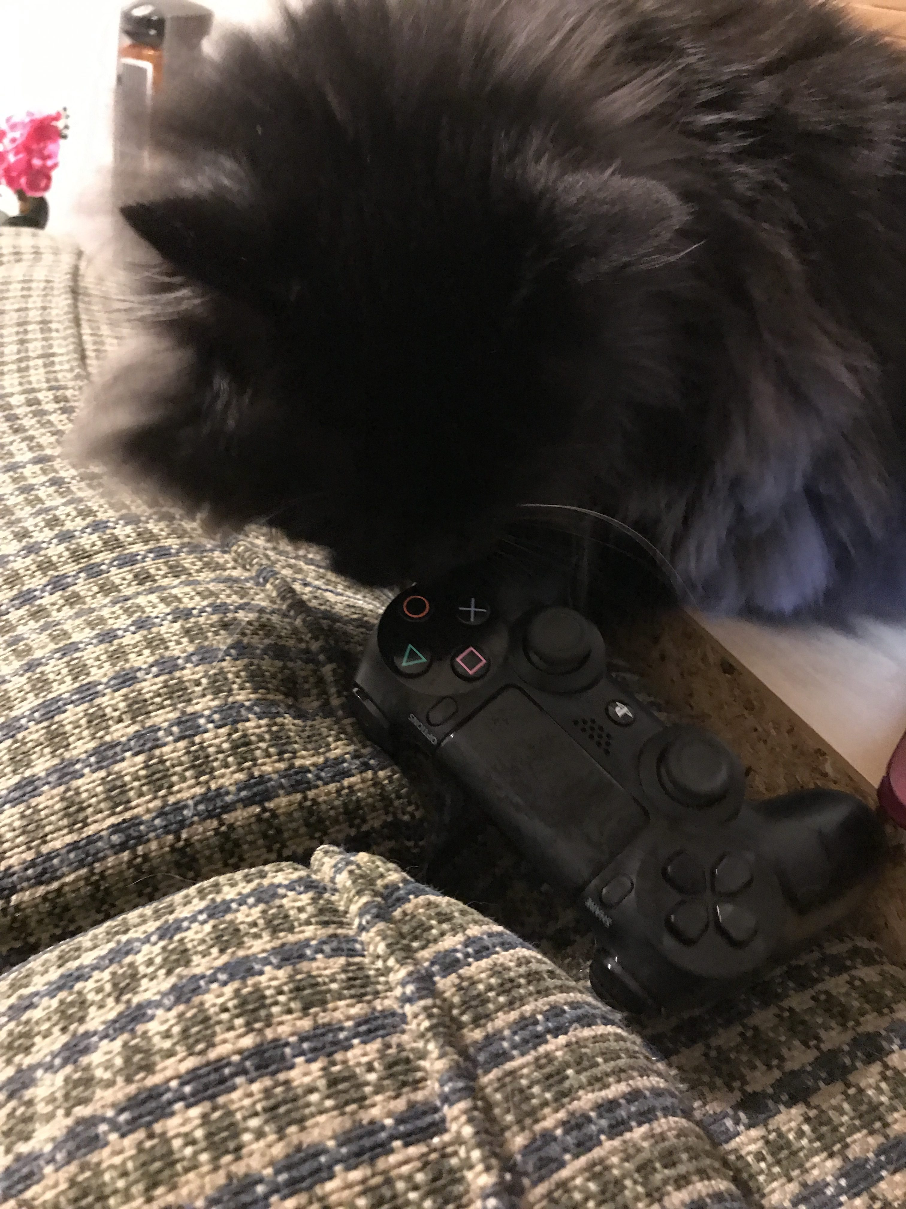 How do you keep your controllers clean? I use a cat.